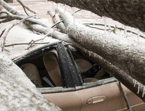 A cazut un copac peste masina ta? Te poate ajuta asigurarea CASCO
